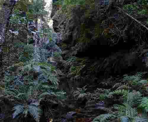727px_rainforest_bluemountainsnsw.jpg - 10.65 kb